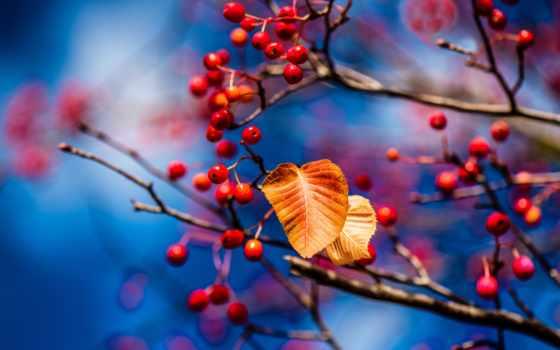 картинка, осень, плод, park, природа, дерево, leaf