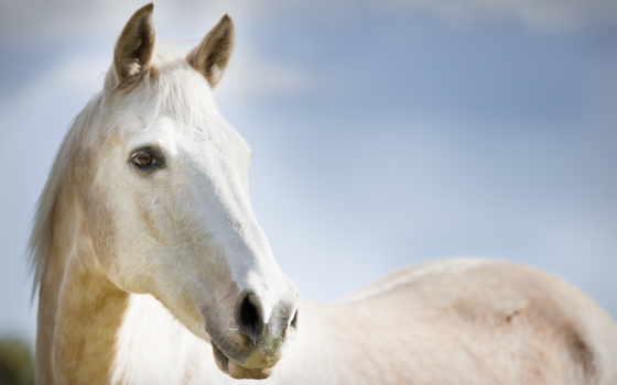 год, лошади, года