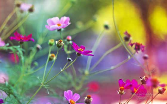 herunterladen, красивые, jetzt, scrapbook, марта, выбрать, хочет, jardin, каждый, user,