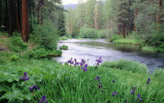 река, gif, one