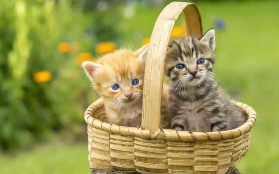 kittens, разрешениях, different
