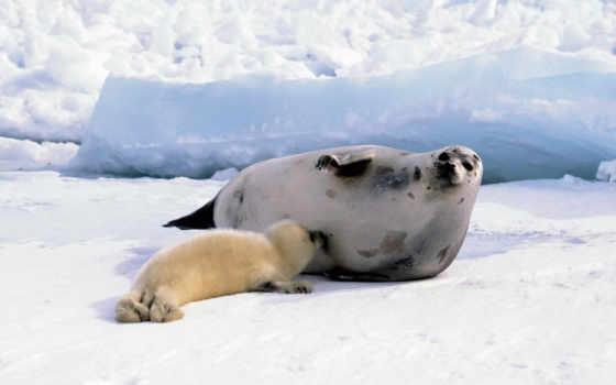 başka, hayvanlar, vfl, тюлень, animals, сайта, морские, tags, маленький, دریایی, animal, мама, животные, abc, тюлени, детёныш,