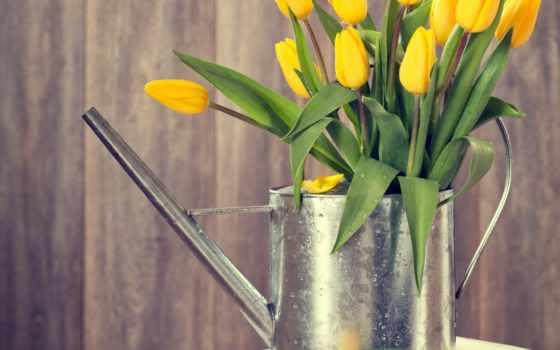 тюльпаны, желтые, images