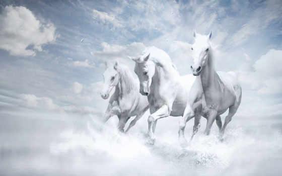 лошади, лошадей, zhivotnye