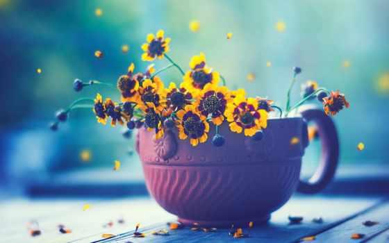 , цветы, горшок, ваниль,