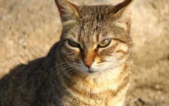 кот, злая, кошки, gatos, котенок, zhivotnye,