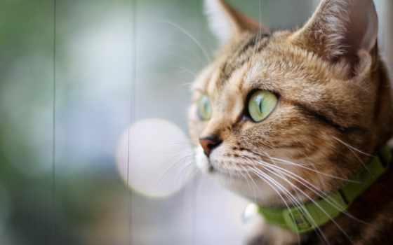 кот, смотрит, свет