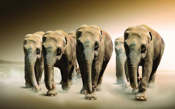 фотообои, картины, слон, слоны, купить, модульные, животных, zhivotnye, яndex, ukraine,