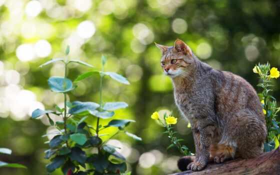 кот, лес, смотреть, растение, hazy, wild