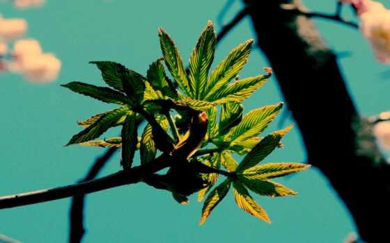 leaf, растение, дерево, весна, язык, branch, зелёный, drop, лист, оранжевый, water