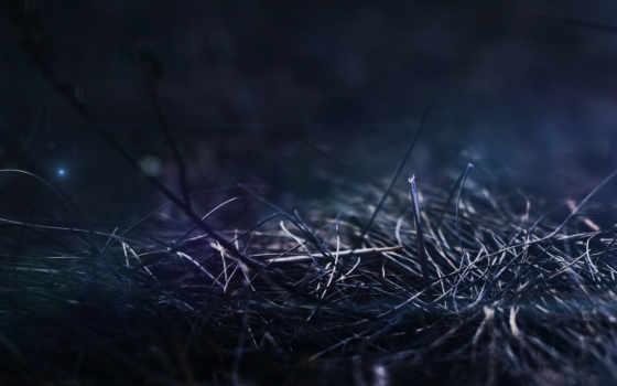 трава, макро Фон № 26169 разрешение 2560x1600