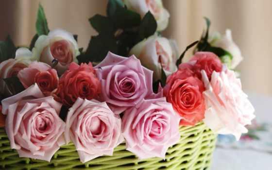 розы, цветы, корзина