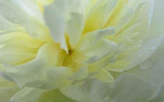 Цветы 100129