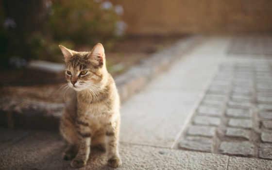 кот, кошки, асфальт