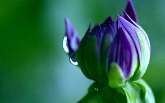 цветы, everything, янв, войдите, water, зарегистрируйте,