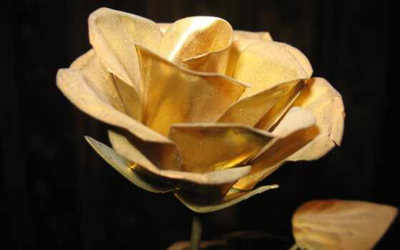 gold, black, роза, more, flowers, об, pinterest, roses, цветы,