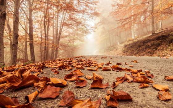 осень, дорога, природа, trees, листва, beech, misty, туманная,