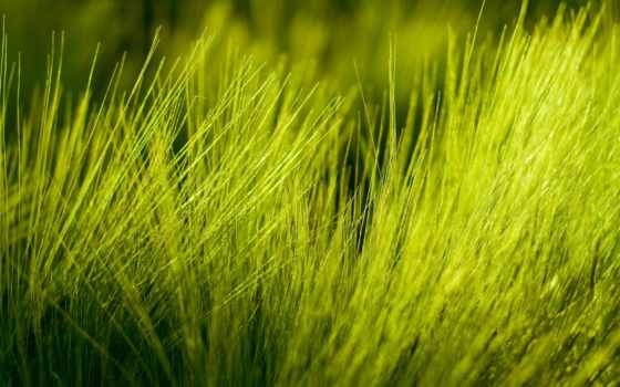 широкоформатные, весна, трава, природа, oboi, макро, травка, лес,