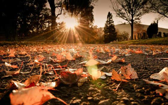 осень, листва, sun, rays, макро, дорога, свет, trees, природа,