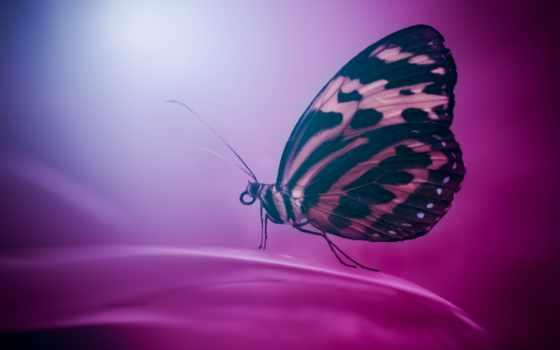 бабочка, desktop, телефон, mobile, wings, макро,