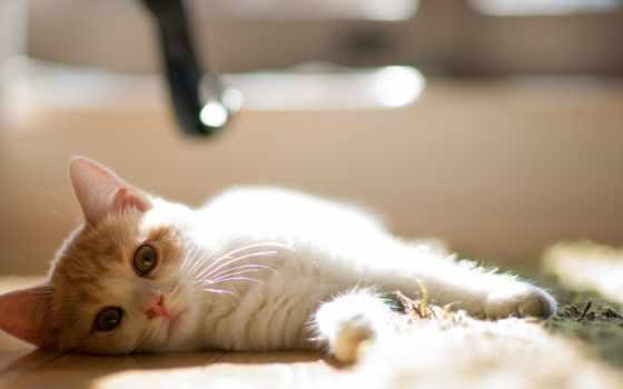котенок, кот, кошки, материалу, котенка, перейти, сне, кошек, но, health,