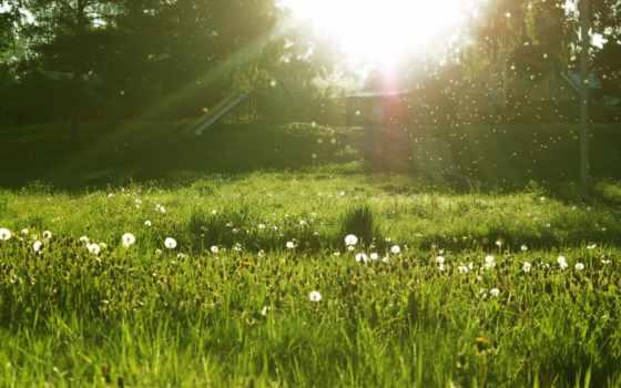 природа, summer, яndex, коллекциях, wallpaperz, поле, природы, зиген, утро,