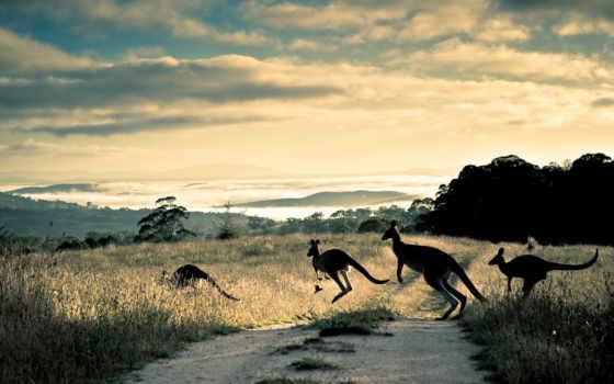 zhivotnye, los, peligro, animales, kangaroo, красивые, extinción, волк, more,