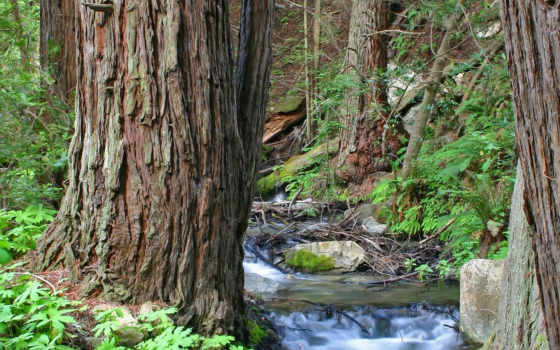 creek, ручей