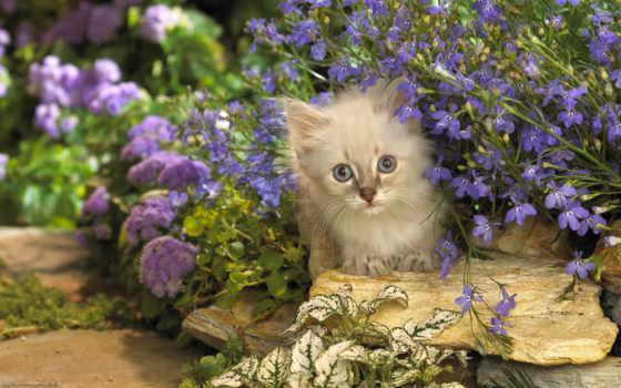 цветы, кот, котэ