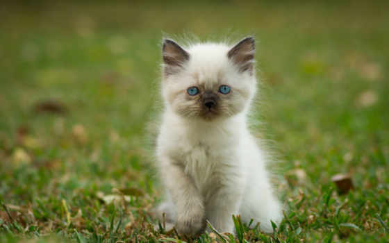 котенок, кошки, vzglyad
