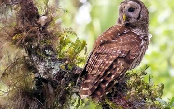 птица, сова, дерево, трава, хищник, природа,