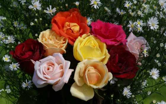 flowers, цветы, ideas, роза, desktop, розы, об, широкоформатные,
