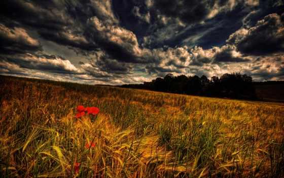 колосьями, поле, картинка, смена, пшеницы, фон, fone, stories, закат,