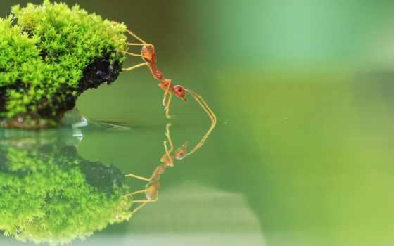красивые, муравьев, снимки, you, красивый, vsnv, ant, животные, яndex,