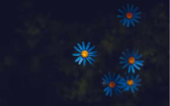 flowers, black, розовый, had, white, который, free, yellow, зелёный,