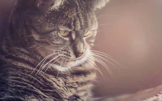 кот, взгляд, морда, природа