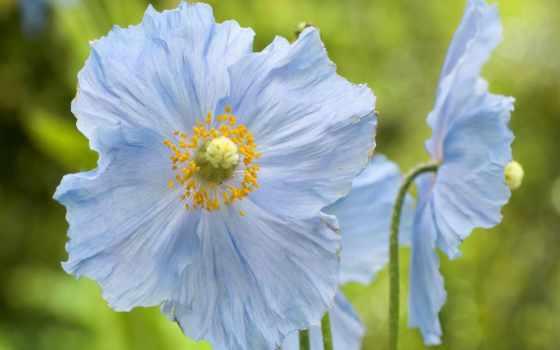 blue, цветы, небо