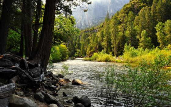 reka, priroda, les