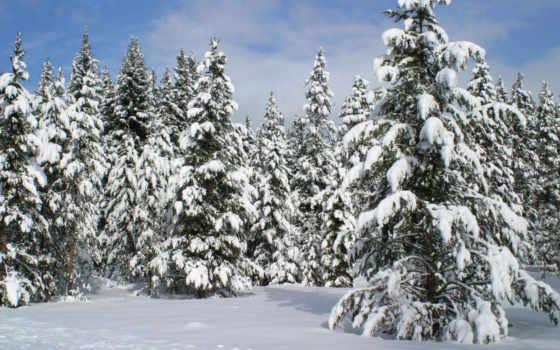 ели, снегу, winter, вышивки, снежные, figurines, природа, схема, new, год,