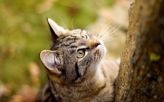 широкоформатные, классные, деревом, кошки, котом, кот, свет, котенок, абстракция, коричневая,