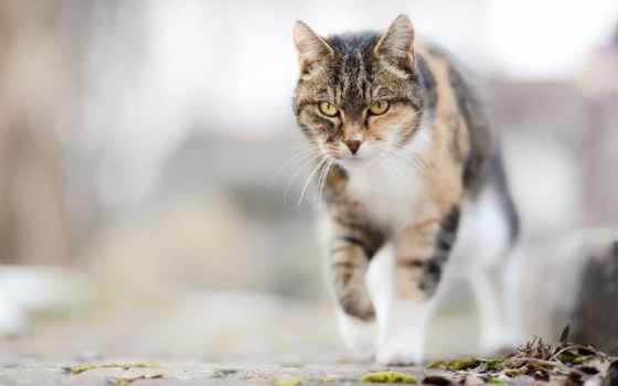 кошки, zhivotnye, свет, после, смерти, страница, котенок, прогулки, желтые,