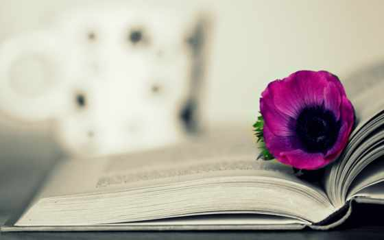 книга, цветы, страницах