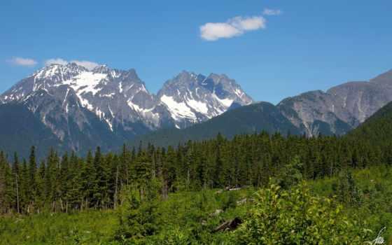 аляска, trees, лес
