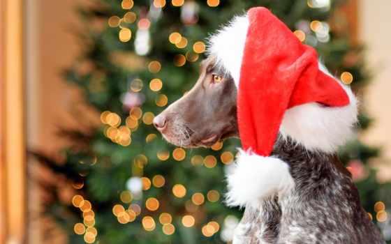 год, new, собаки, лучшая, коллекция, загружено, уже, zhivotnye, one, fone,