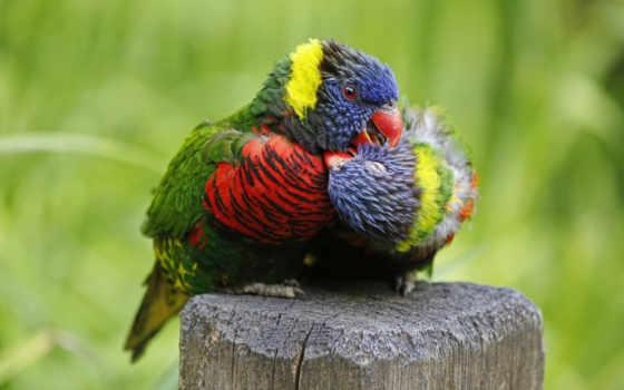 яndex, попугаи, коллекциях