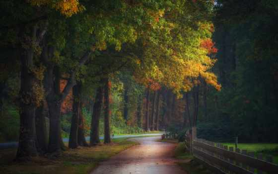 лес, нидерланды, осень, fore, magical, different, природа, trees, national
