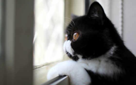 кошки, кот, коты