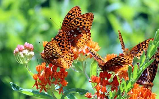 бабочки, цветы, макро