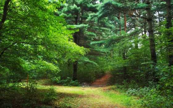 природа, лес, фоны