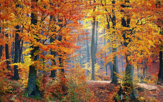 balade, ест, forêt, automne, лес, au, une,